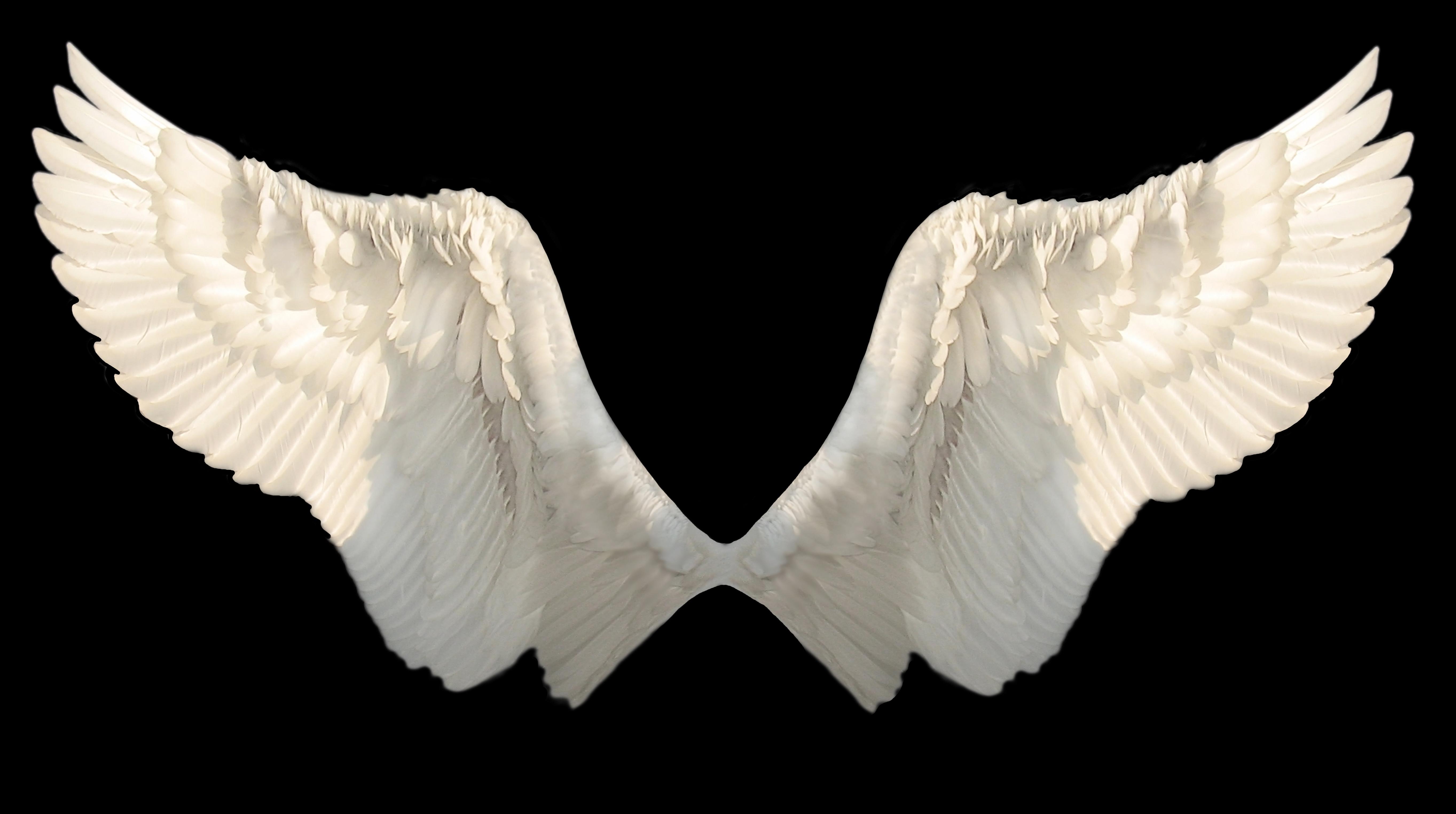 崩壊天使アストレイア